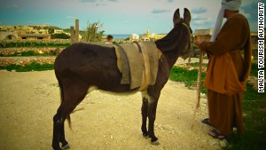 Malta\'s nativity experience includes grazing live animals.
