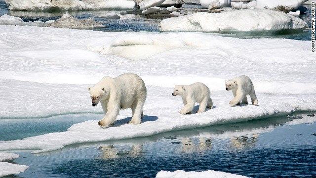To fulfill all your Arctic fantasies, Crystal Cruises will be offering a 32-day Northwest passage cruise from Alaska to new York, via Nunavut, Greenland and the fjords of Baffin Island on the Crystal Serenity.