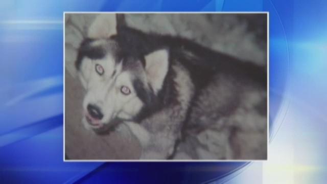 Woman convicted of killing neighbor's dog