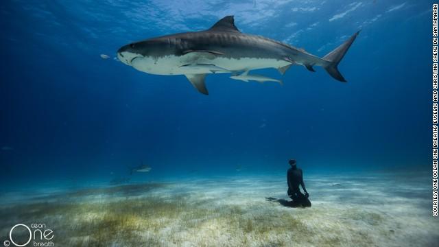 La maravilla del mundo submarino, en fotos