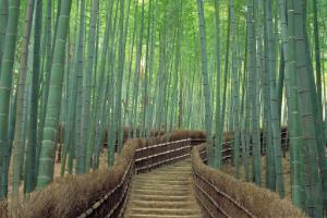 Sagano (Kioto)