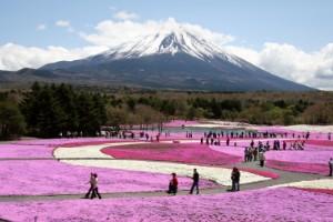 Festival de flores Fuji Shibazakura, (Yamanashi)