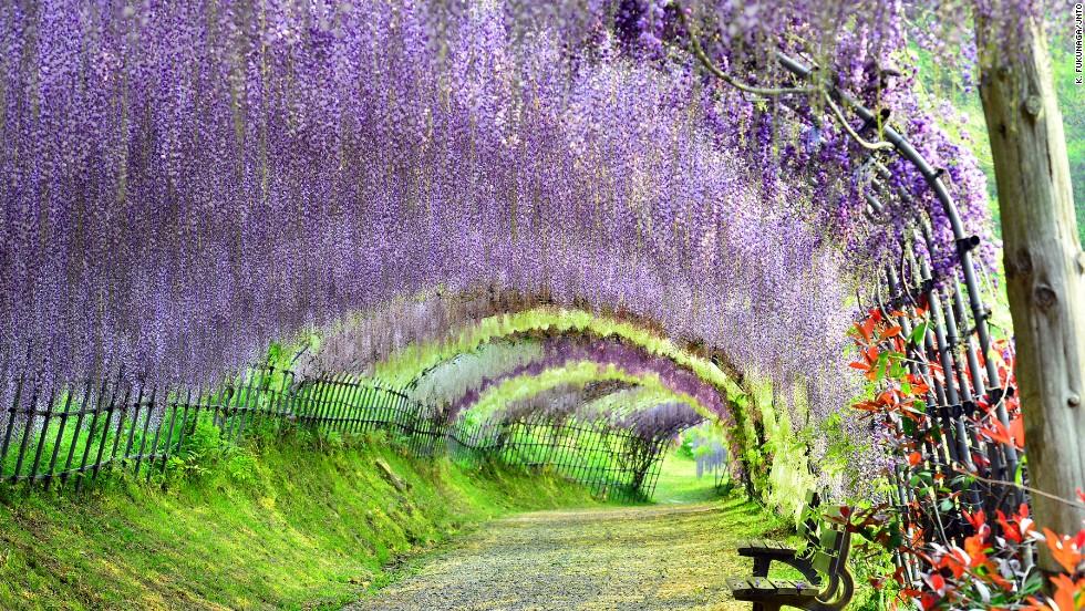Jardín Kawachi Fuji (Fukuoka)