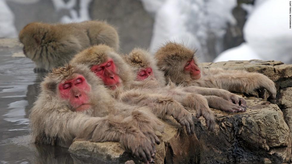 Parque Jigokudani Monkey (Nagano)