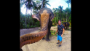 Elephant snatches man's camera, takes amazing 'elphie'