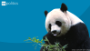 U.S., China first ladies name panda