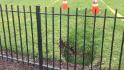 Sinkhole appears on White House lawn