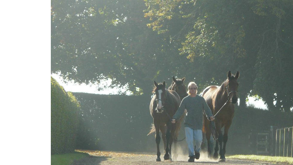 Yearlings, the name given to horses who are one-year-old, are led out at the Aga Khan stud farm.