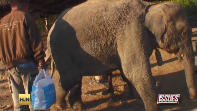 Teen makes documentary about elephants