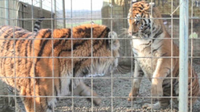 Police defend killing exotic animals