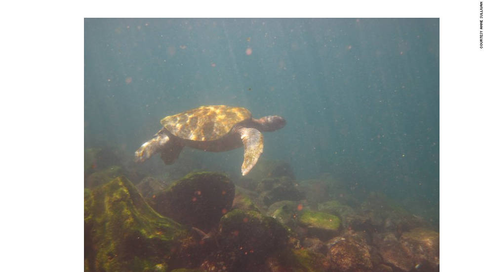 Sullivan shared several photos she took while underwater. Snorkeling and diving are popular activities on the islands, and you might get lucky and spot a turtle or two.