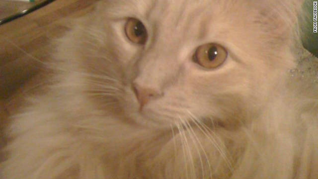 Jack the Cat went missing at John F. Kennedy International Airport on August 25.