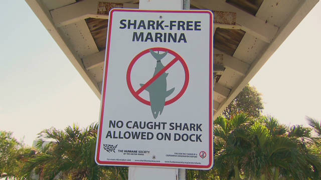 Sharks and the environment
