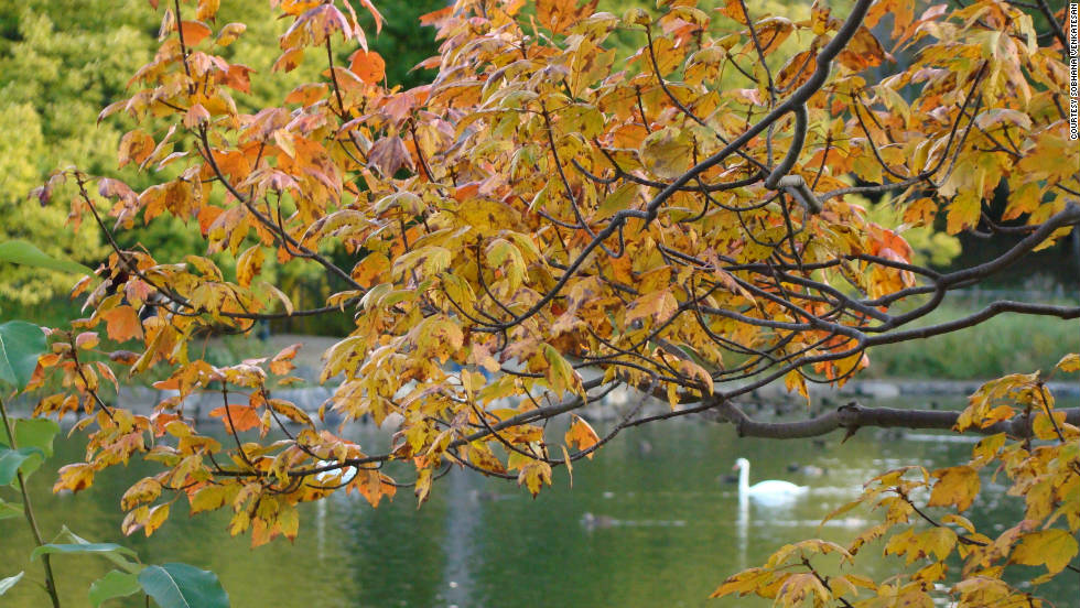 "Sobhana Venkatesan snapped a shot of this swan in Bowring Park in Newfoundland. ""Fall in Canada is enchantingly beautiful. The maple forests are a wonderful sight to behold."""
