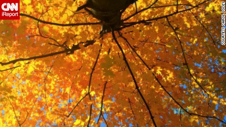 Happy fall! Here's why leaves change color