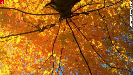 Drought to keep fall colors at bay
