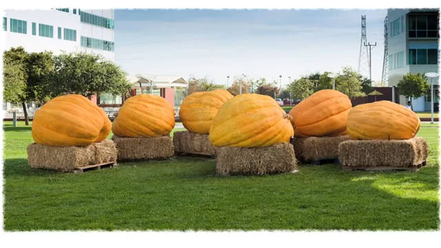 Google's doodle team celebrates Halloween by showing the transformation of giant pumpkins.
