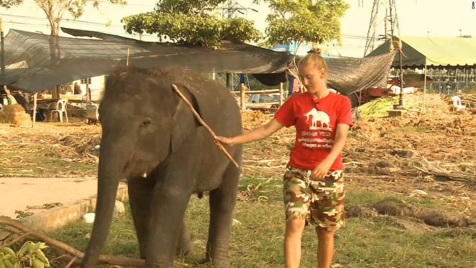 Thai Royal Elephant Thai Elephants Struggle After