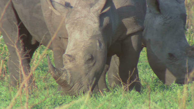 The war against rhino poaching