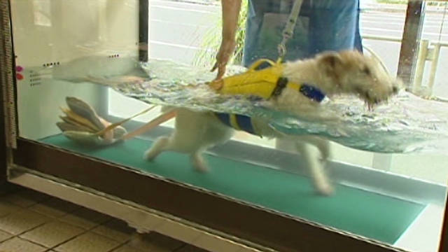 Aqua-fitness for dogs