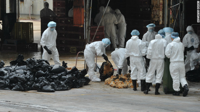 Workers place dead chickens into plastic bags after they were killed in Hong Kong on December 21.