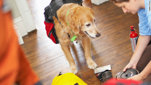 Make sure you have proper travel gear to make air travel as safe as possible for your pet.