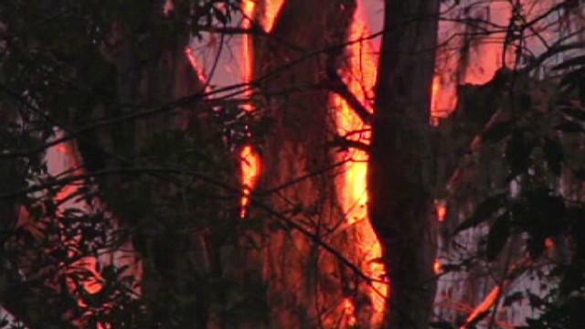 World's oldest cypress tree burns