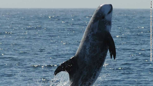 Whales and dolphins use sounds to communicate and navigate in the ocean.