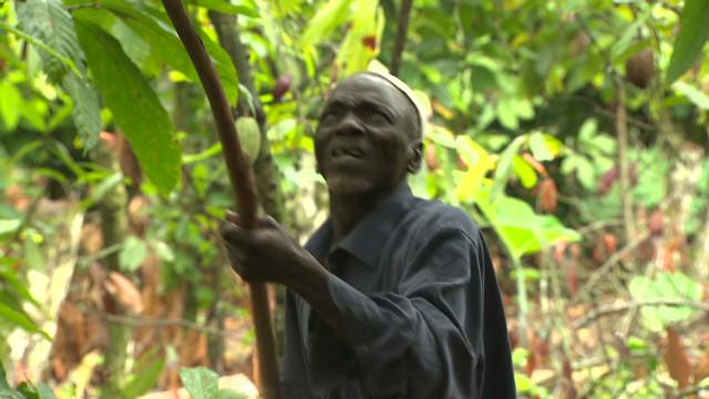 Govt. promise leaves cocoa farmer bitter