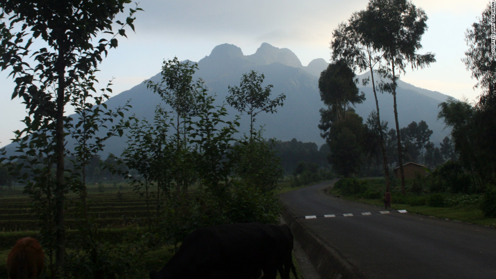 The mountainous terrain is beautiful, yielding strenuous high-altitude treks to see the gorillas.
