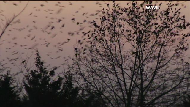 pkg moos bird apocalypse_00000000