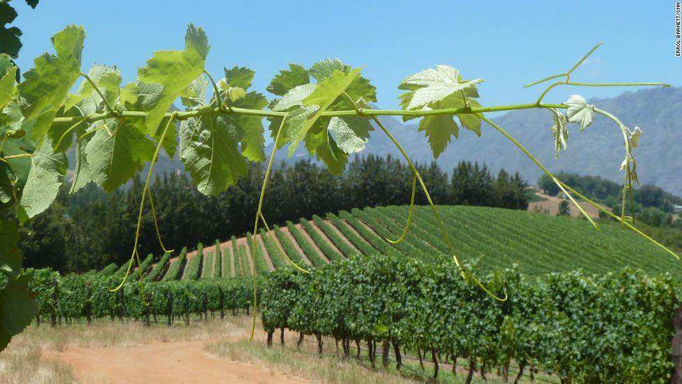 Stellenbosch, in the Western Cape of South Africa, is a prime wine-making area.