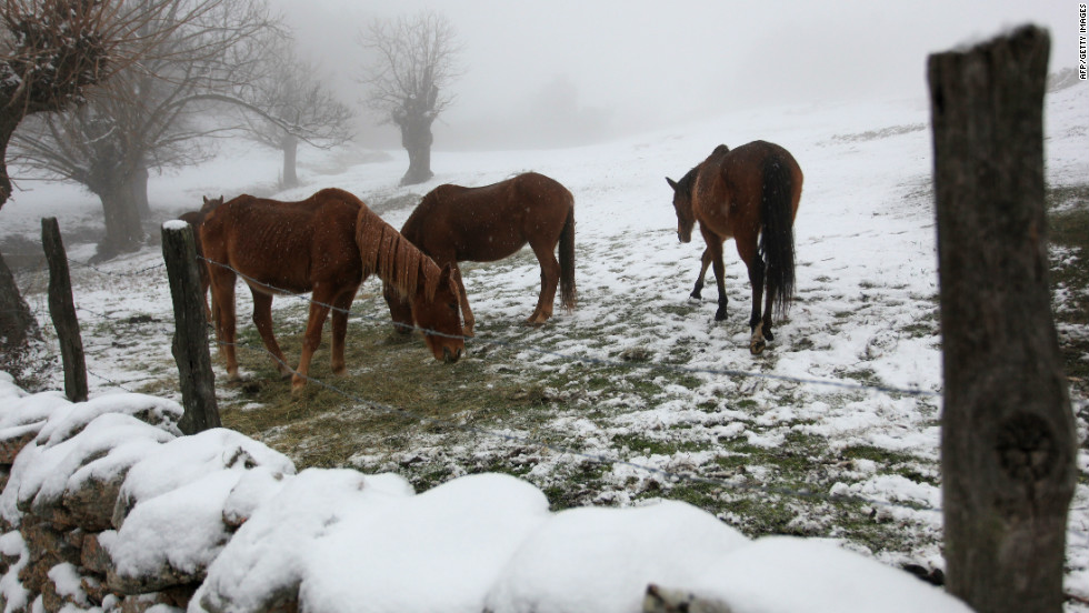 A picture taken on February 6, 2012 shows horses in a field covered with snow in the Corsican village of Cognocoli-Monticchi. In France, 39 of the country's 101 regions were on alert for deep cold or snow, down from more than half the regions at the weekend.
