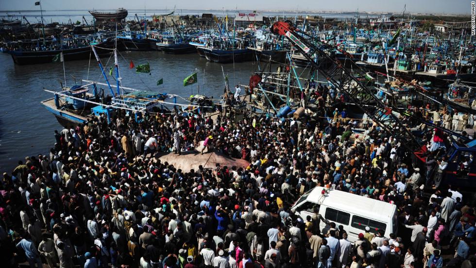 """Una gran multitud se reunió para echar un vistazo a la """"bestia"""" que fue sacada del agua por la pesquera local Charai."""