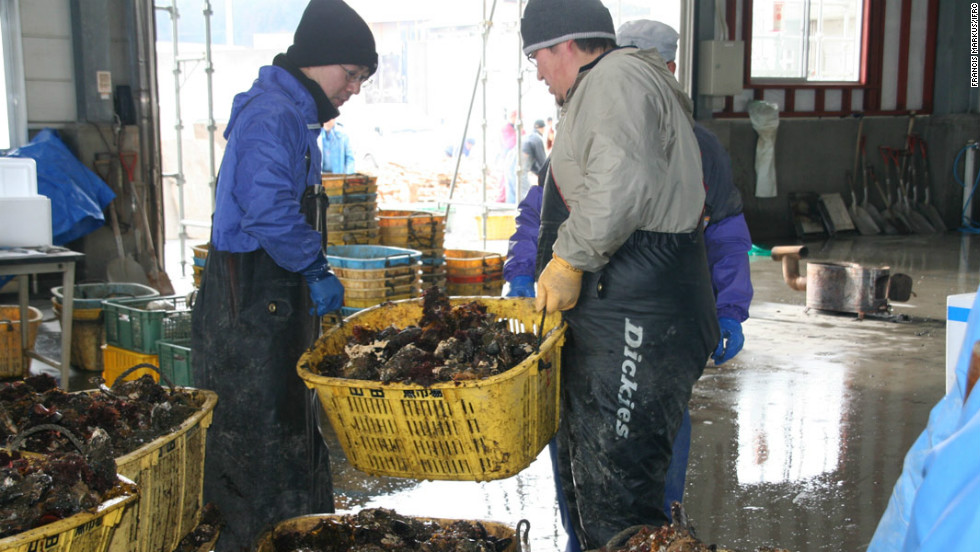 Tatsuya Izutsu and his colleagues carrying the oysters that their fishing cooperative in Tohoku region has harvested. But they are only producing 30% of what they were before the disaster.