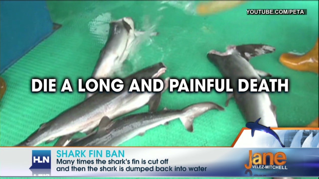 2012: Banning sale of shark fins