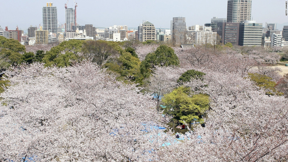 Skyscrapers tower over Fukuoka's Maizuru Park with its abundant cherry trees.