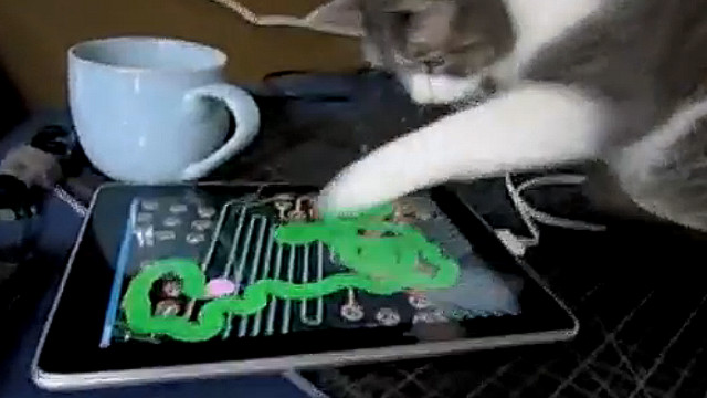 2010: iPad becomes one pricey cat toy