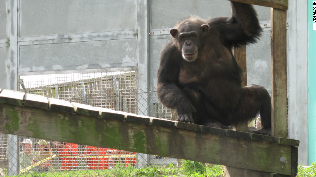 Chimpanzees are not as useful as they once were for biomedical research, experts say.