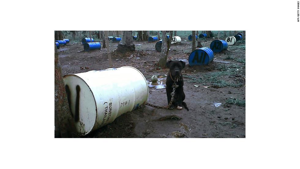 Los perros estaban atados a viejos barriles metálicos.