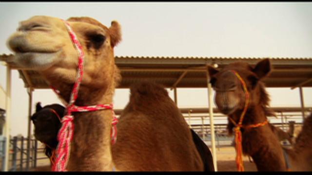 inside middle east camel milk_00005230