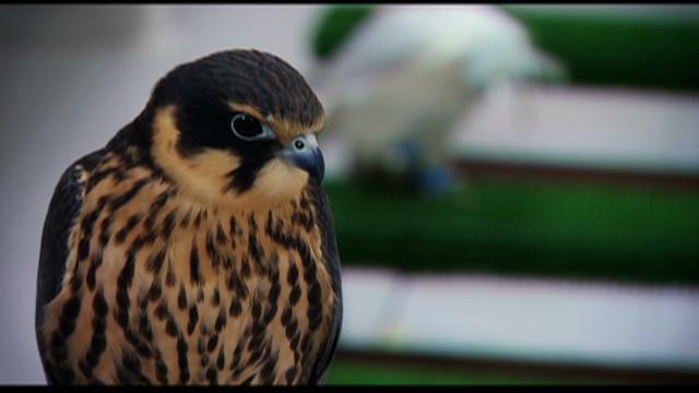 inside middle east falcon hospital_00014625