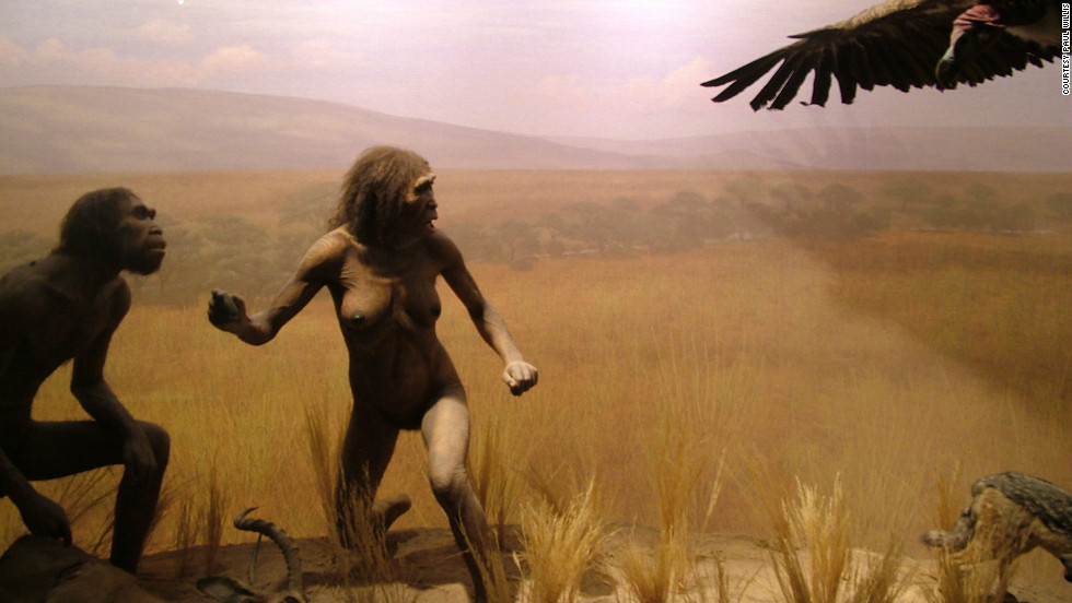 Early Humans Evolution Evolution at the Ameri...