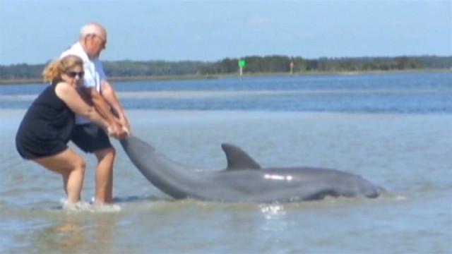 fl dnt dolphin rescue_00001308