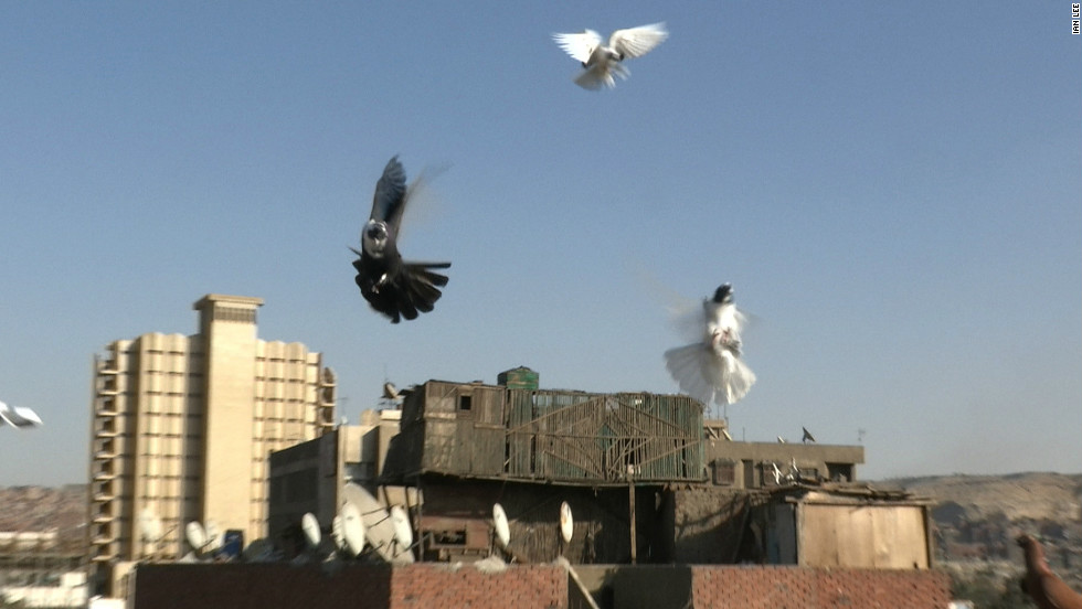 Pigeons coming in to land in a rooftop loft in Cairo.