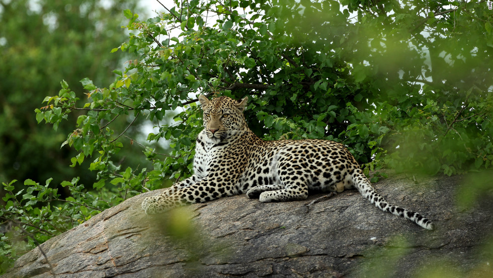 The park's wildlife also includes leopards, cheetahs, zebras, impalas and numerous birds.