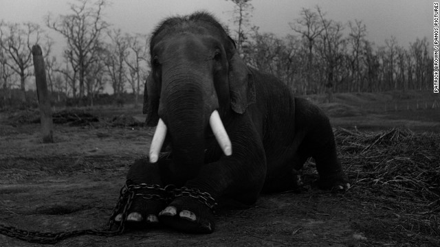 Photographer documents animal trade