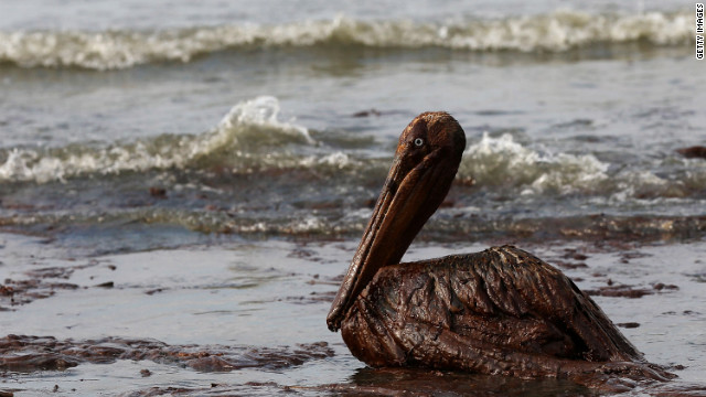 An oil-soaked pelican wallows in surf on East Grand Terre Island, Louisiana, on June 4, 2010, after the Deepwater Horizon spill.