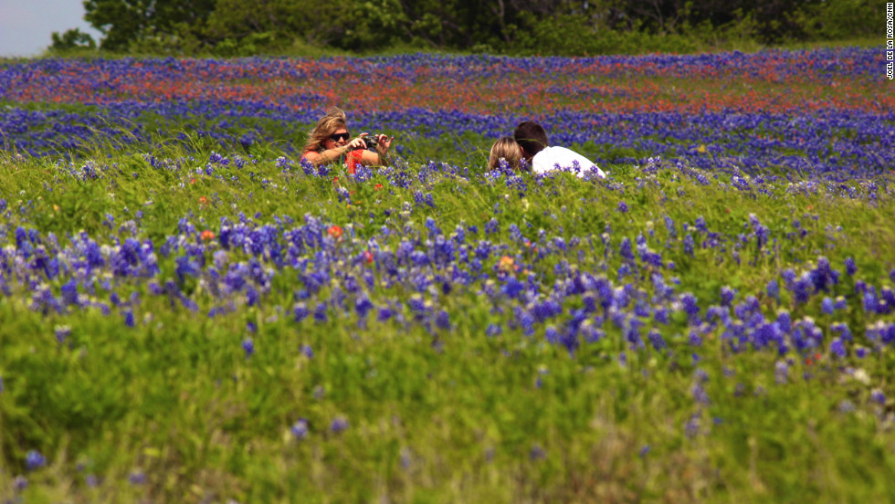 People take a picture in a field full Texas' state flower.