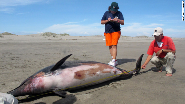 Mass dolphin die-off in Peru